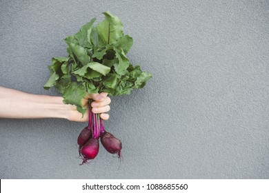 Beet in a hands on a background. Hand and beet.