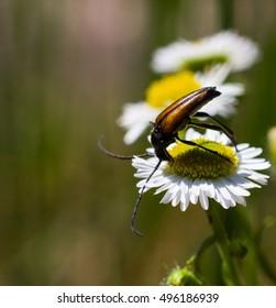 Beetle - Shutterstock ID 496186939