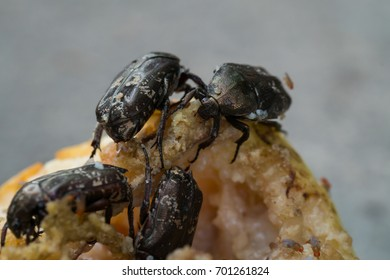 Beetle eat fruit