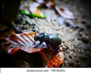 Beetle in a jungle