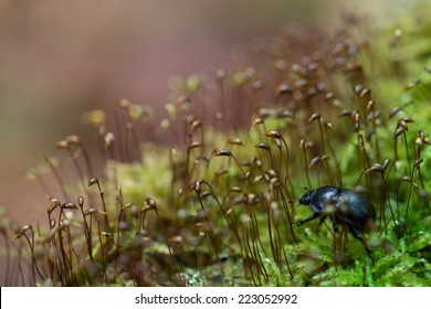 Beetle in the moss