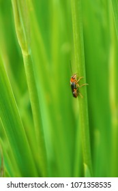 Beetle on grass with black and red spots