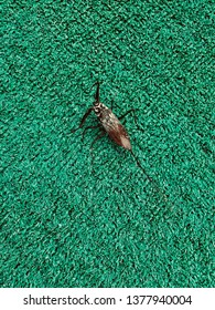 beetle on the green carpet