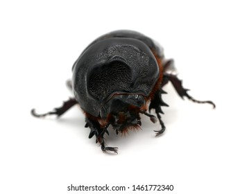 Beetle at overturn on a white background.