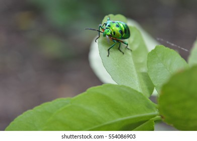 beetle sitting in green life is amazing captured
