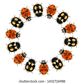 Beetles. Circular design with ladybugs (ladybird beetles) (Coleoptera: Coccinellidae). Isolated on a white background