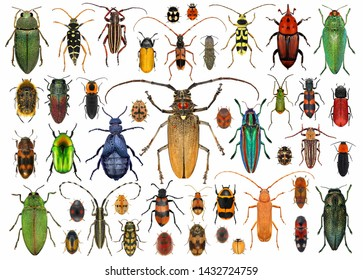 Beetles (Coleoptera). Set of beetles isolated on a white background