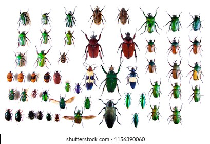 Beetles on the white background