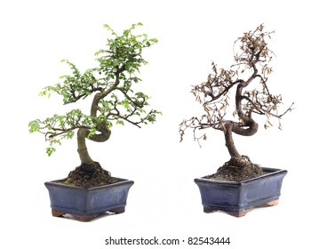 Dry Bonsai High Res Stock Images Shutterstock
