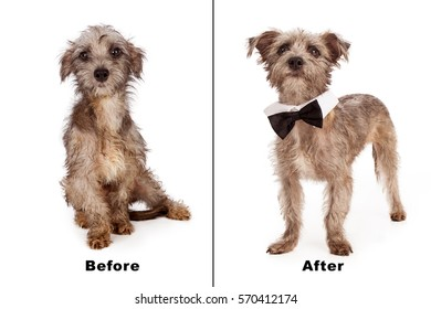 Before and after photo of a rescued dog that was scared and dirty. Now clean, groomed and confident
