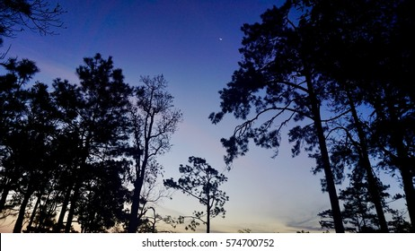 Before sunrises at 6 AM in the morning winter season with trees silhouette at Phukradueng national park