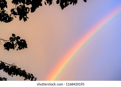 before sunset the sun in the summer evening branches of trees silhouettes and a rainbow, a multicolored arc