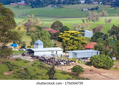 Bega, Australia - April 18 2014: A dairy farm in Bega on a sunny day in New South Wales, Australia