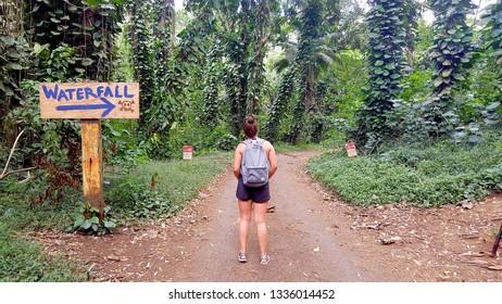 Beginning of the Manoa Falls Hike