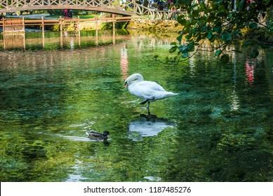 Beginning river Bosna at Nature park Vrelo Bosne