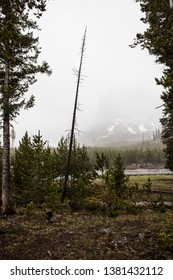 The beginning of a snowstorm photograped up a mountain in Yellowstone National Park, North America.