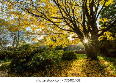 Beginning of winter, leaves begin to change color.