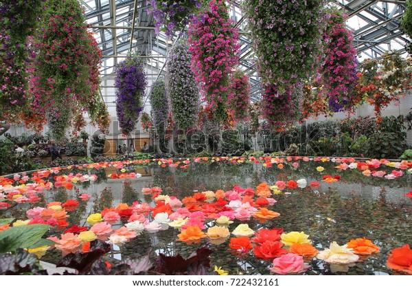Begonia Garden Nabana No Sato Flower Stock Photo Edit Now 722432161