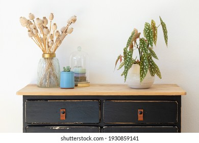Begonia Maculata next to dried poppy seed pods in golden glass vase on vintage sideboard with black drawers against white background.
