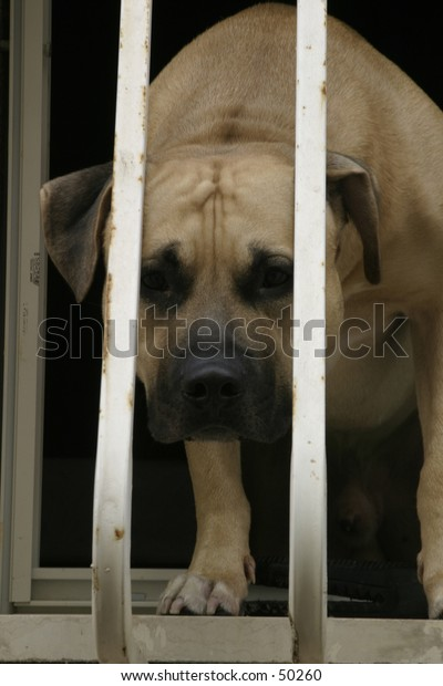 Behind bars.  a dog behind bars with a sad look on it's face.