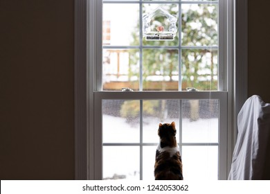 Behind calico cat back watching, under wild house finch pair, two birds eating inside of bird feeder, feline sitting on chair in house, home room hunting, looking through window outside, outdoors