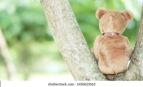 The behind of teddy bear sitting on the tree, nature in the garden. Can be used for background concept.