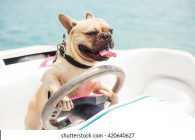 Behind the wheel of a high-speed boat sits a dog, french bulldog, put his paws on the steering wheel, on the background of the sea, sunny summer day, carefree