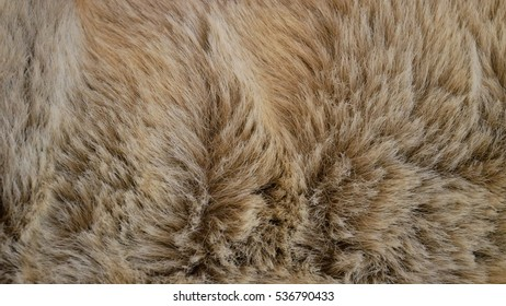 Beige and brown animal fur textured background close up feel like comfy bear fur when lay down on fluffy mattress bed