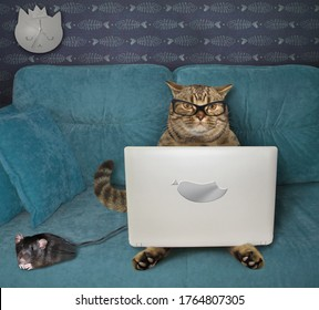 The beige cat in glasses is using a silver laptop on a blue sofa at home. A black computer mouse is next to him.