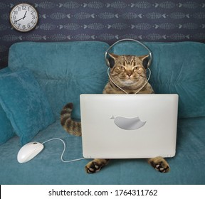 The beige cat in headphones is using a silver laptop on a blue sofa at home. A white computer mouse is next to him.