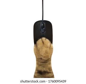 The beige cat paw is lying on a black wired computer mouse. White background. Isolated.