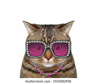 A beige cat wears stylish glasses and a necklace. White background. Isolated.