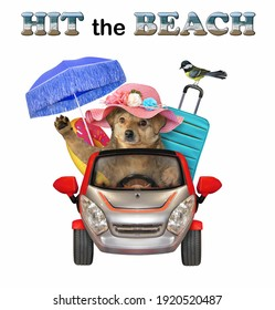 A beige dog drives a red car to the sea. Hit the beach. White background. Isolated.