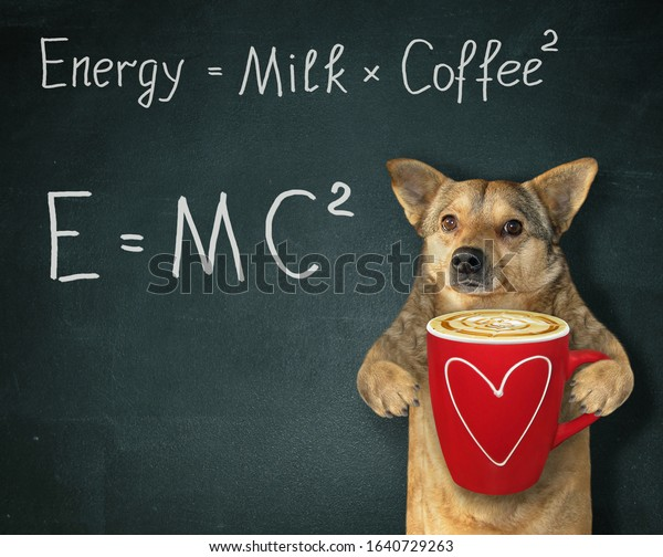 The beige dog holds a red cup of black energy coffee with milk. There are two funny formulas next to him. Black background.