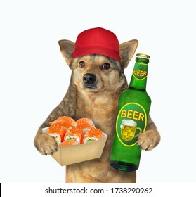 The beige dog in a red cap is holding a bottle of light beer and a paper bag with sushi. White background. Isolated.
