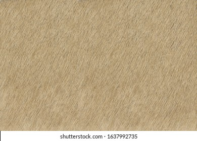 Beige hair on hide leather texture high resolution