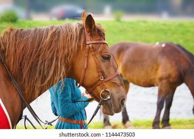 Beige horse with mane.