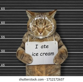 The beige naughty cat was arrested. He has a sign around its neck that says I ate ice cream. Lineup black background.