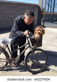 Beijing, China - March 2016: Smiling Chinese man with poodle dog in his bicycle basket, Beijing, China