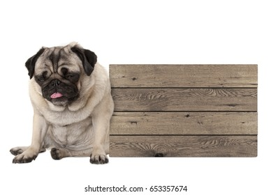 being fed up pug puppy dog sitting down next to blank wooden sign, isolated on white background