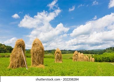 Bela krajina, Slovenia. Traditional hay stacks on the field. - Shutterstock ID 202208284