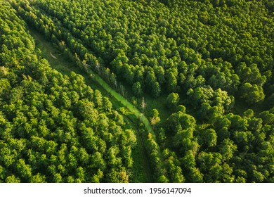 Belarus. Aerial View Of Green Small Bog Marsh Swamp Wetland In Green Forest Landscape In Summer Day. High Attitude View. Forest Lane In Bird's Eye View.