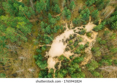 Bielorrusia. Vista Aérea De Bosques Mixtos. Forestación. Entrada De Suelo Arenoso En El Bosque. Vista Por Drones De Los Bosques Europeos En Springtime. Paisaje forestal. Forestación de arena.
