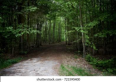 Belarus. Brest. Trees in the territory of Belovezhskaya Pushcha. May 23, 2017