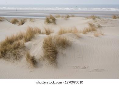 Belgian coast dunes