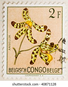 BELGIAN CONGO - CIRCA 1960: A stamp printed in the Belgian Congo showing an image of the orchid Ansellia, series,  circa 1960