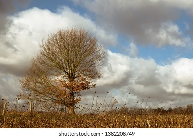 A Belgian landscape in early spring with a barren tree and remains of last year's crop. Showcasing the colors found in the paintings of the Dutch Masters