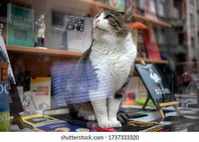 Belgrade, Serbia, Feb 7, 2020: Cat that appeared in a bookstore showcase