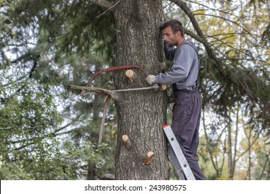 BELGRADE, SERBIA - OCTOBER 02: Man climbed on a ladder cleaning out dead, dying, diseased and broken branches from tree in October 2014.