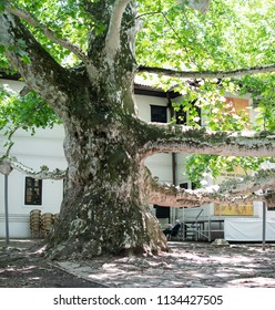 Belgrade,Serbia-July 12,2018.Image shows the residence and the big plane tree of Prince's Milos former ruler of Serbia at Topcider park.